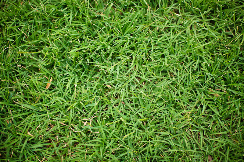 austin photographer 365 photo project grass